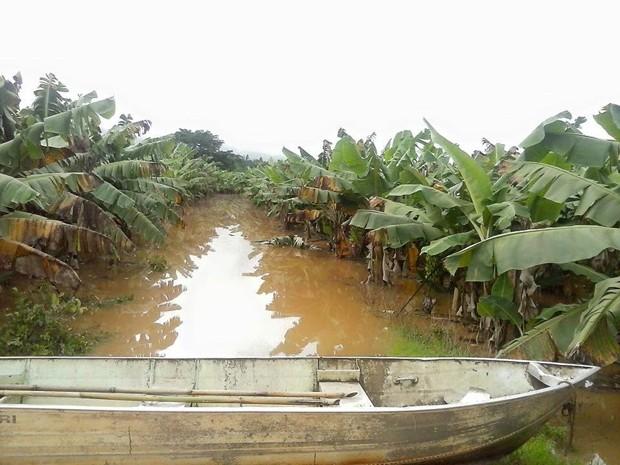 Bananais ficaram alagados em várias cidades do Vale do Ribeira (Foto: Sindicato Rural do Vale do Ribeira/Divulgação)