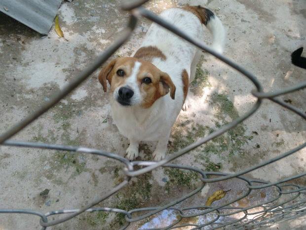 Ativista procura novo sítio para cuidar dos animais em Jundiaí  (Foto: Valéria Bianchi/SOS Animais Abandonados)