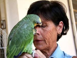 Artesã recuperou papagaio após 48h em Rio Claro (Foto: Vitor Liasch/O Jornal)