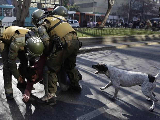 Cão late para policiais que detém um homem durante manifestação de professores, em Santiago, na quarta (17) (Foto: AP Photo/Jorge Saenz)