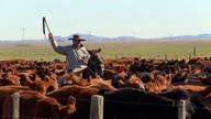 Cruzamento entre raças é destaque na produção de carne bovina