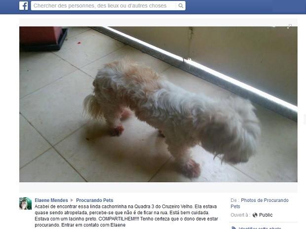 Publicação da servidora pública Elaene Mendes na página Procurando pets (Foto: Facebook/Reprodução)