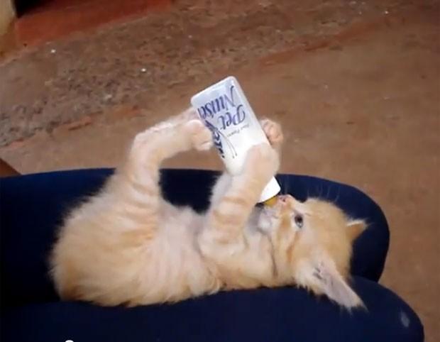 Vídeo mostra gatinho segurando mamadeira com as patas enquanto bebe leite  (Foto: (Foto: Reprodução/YouTube/LikeavideoTV)