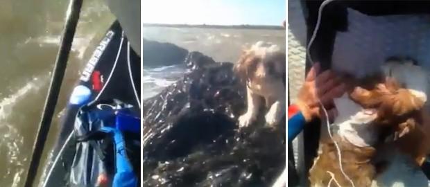 Animal ficou encurralado pela água mas foi resgatado pelo instrutor (Foto: Reprodução)