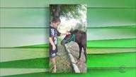 Menino canta música gaúcha ao lado do 'amigo cavalo'