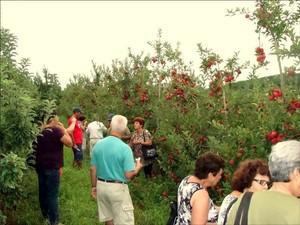 Visitantes conhecem pomar e fazem colheita de frutas (Foto: Natália Latrechia/Arquivo pessoal)