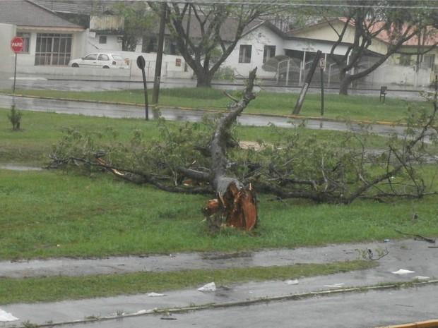 Tempestade derrubou várias árvores em União da Vitória  (Foto: Marjorie dos Santos / VC no G1)