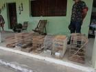 CPRH resgata 60 pássaros silvestres e evita desmatamento no Sertão de PE