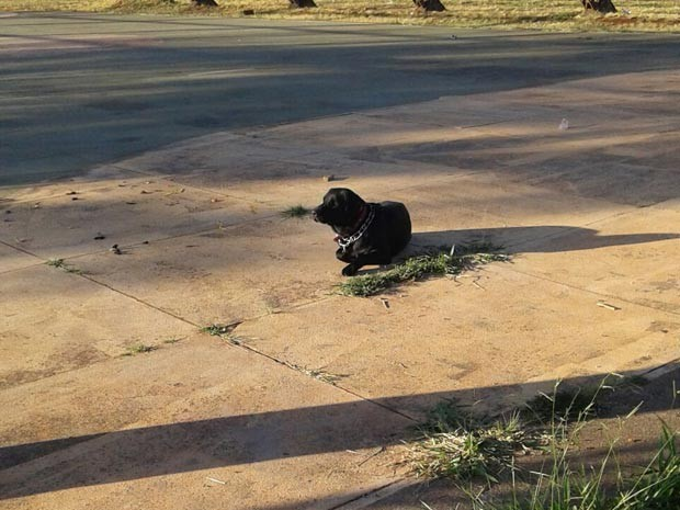 Labrador em 'vigília' no local onde dono morreu durante passeio no DF (Foto: Polícia Militar/Divulgação)