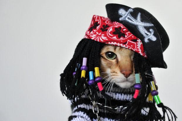Felino usou fantasia de pirata (Foto: Vyacheslav Oseledko/AFP)