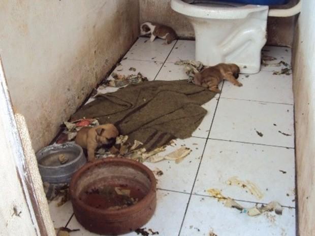 Cerca de 60 cachorros foram encontrados em situação precária. Rio Preto (Foto: Divulgação/Polícia Ambiental)