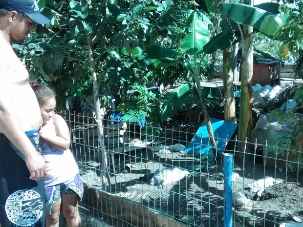 Animais mortos em Cabo Frio (Foto: Blog Repórter Eduander Silva) Crianças se assustaram com a morte dos animais (Foto: Blog Repórter Eduander Silva)