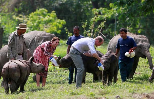 William e Kate alimentaram rinocerontes e elefantes na Índia (Foto: Anupam Nath/Reuters)