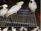 Máfias malaias usam Facebook para contrabando de animais selvagens