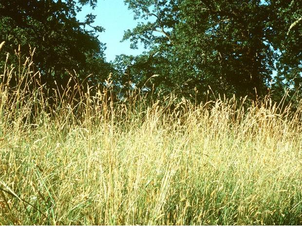 Biodiversidade evita colapso em ecossistema (Foto: Andrew MacDougall/University of Guelph)