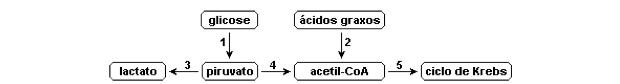 Esquema com etapas do metabolismo (Foto: Colégio Qi/Reprodução)