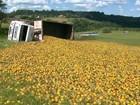 Caminhão com laranjas tomba no acesso da SP-310 em São Carlos