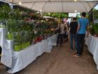 Festival de flores no AP recebe mais de 4 mil visitas por dia, diz organização