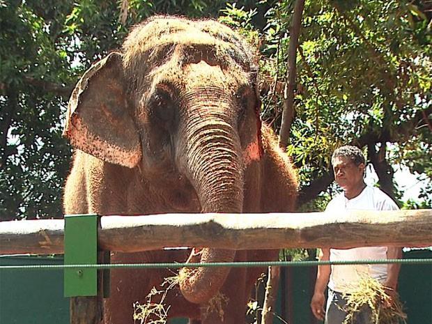 Visitação para elefante da Índia foi aberta neste sábado (23) em Ribeirão Preto (Foto: Reprodução EPTV)