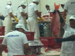 A empresa embargada desde março de 2012 foi flagrada em pelo funcionamento pelos agentes do Ibama no Pará (Foto: Divulgação/Ibama)