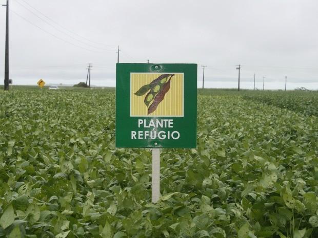 Área de refúgio de soja em Mato Grosso. Delimitação deve seguir recomendações técnicas de empresas (Foto: Leandro J. Nascimento/G1)