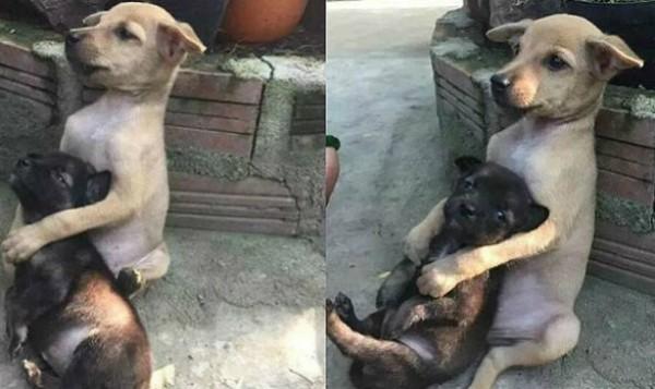 Cachorros se tornam inseperáveis após adoção por budistas na China (Foto: Reprodução/Weibo)