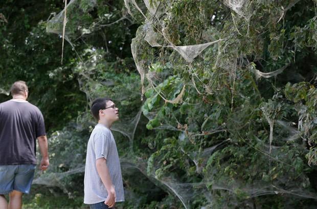 Teias foram feitas por aranhas de diferentes espécies (Foto: LM Otero/AP)
