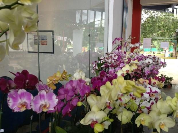 4ª Fest Orquídea espera pelo menos 500 visitantes na exposição que reúne mais de 150 plantas (Foto: Larissa Matarésio/G1)
