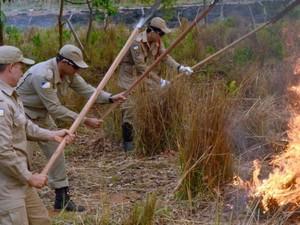 Serão contratados 40 brigadistas para atuar em sete municípios (Foto: Divulgação/ATN)