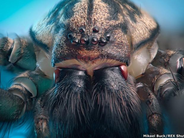 Fotógrafo Mikael Buck capturou algumas imagens aumentadas de insetos na Europa (Foto: Mikael Buck/Rex Shutter Stock)
