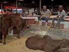 Edição de feira agropecuária deve movimentar R$ 30 milhões em MT