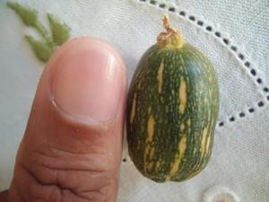 A abobrinha tem quase o mesmo tamanho de uma unha (Foto: Divulgação)