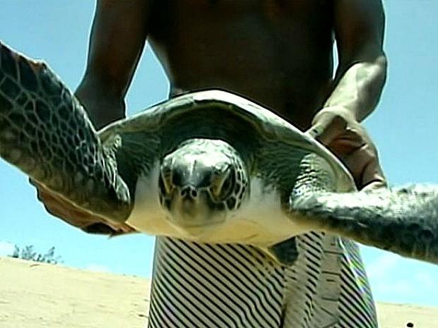 Surfistas ajudaram o animal e o devolveram para o mar no Espírito Santo. (Foto: Reprodução/TV Gazeta Norte)