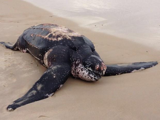 Tartaruga é encontrada morta na Praia do Leblon (Foto: Paula Levy / TV Globo)