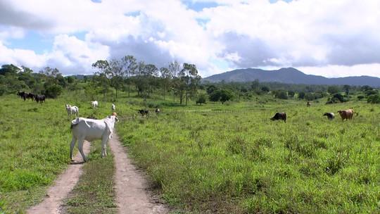 Fantástico mostra fazendas de Geddel que somam mais de 900 hectares