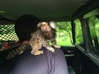 Macaco é 'preso' com dono após jovem bater carro nos EUA