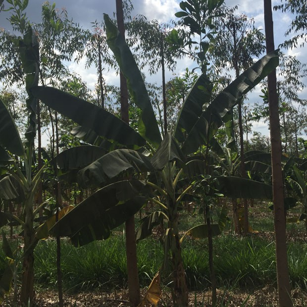 Fazenda da Toca (Foto: Divulgação)