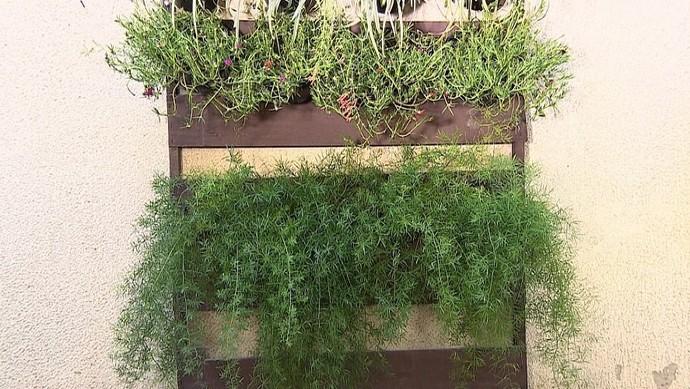 Jardim vertical: natureza dentro de casa (Foto: TV Sergipe)