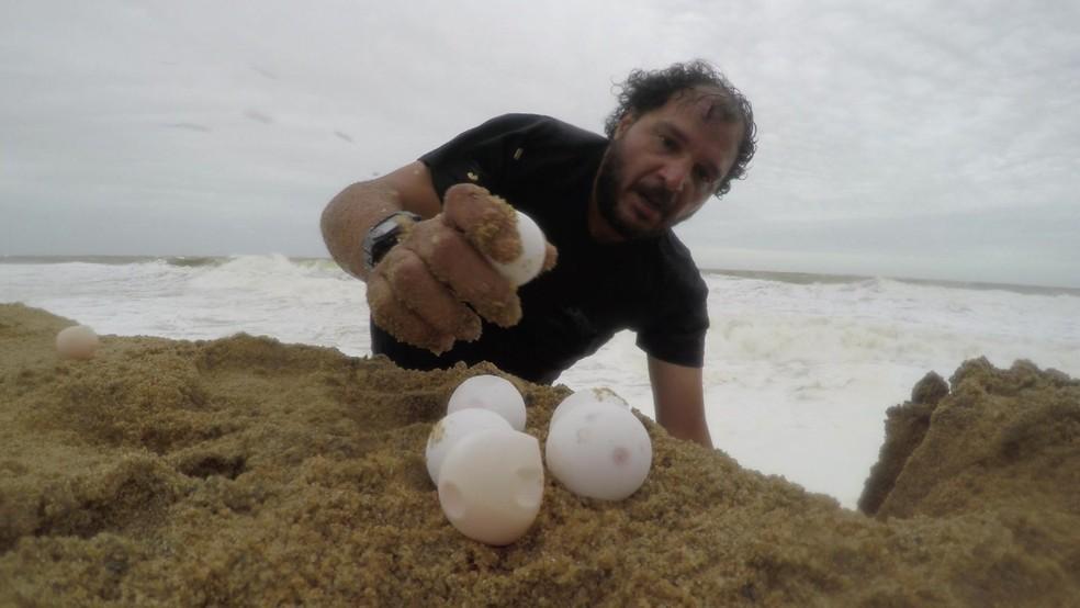 Trabalho levou quatro dias e conseguiu salvar 60 ninhos (Foto: Reprodução)