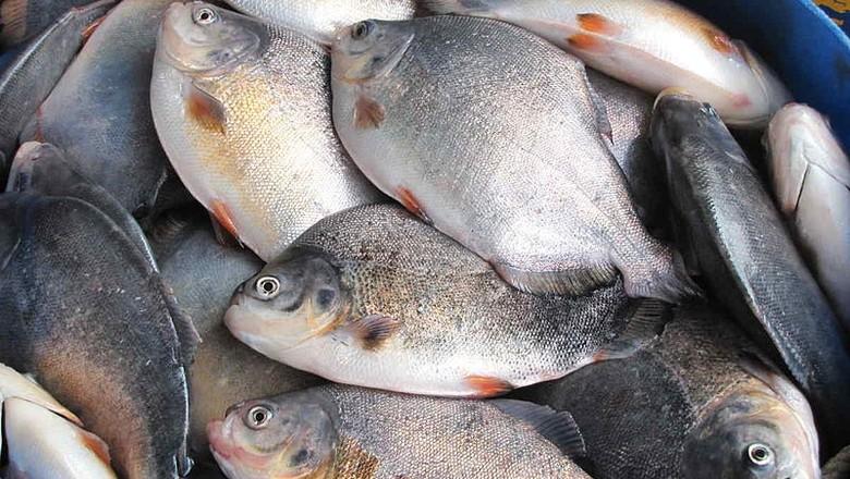 peixes-pesca-pescaria-piscultura (Foto: Creative Commons/Bill Bredley)
