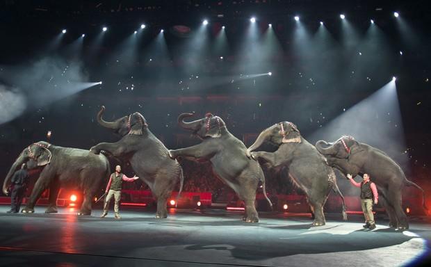 Foto de janeiro de 2015 mostra apresentação de elefantes no Circo Ringling Bros. and Barnum & Bailey Circus na Flórida  (Foto: AP Photo/Feld Entertainment Inc., Gary Bogdon  )