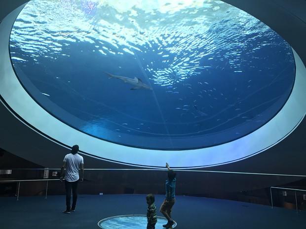 Frost Museum of Science: um tour pelo novo museu de Miami (Foto: Amanda Sequin)