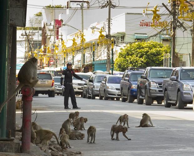 Em Lopburi os macacos atrapalham o trânsito!  (Foto: Domingão do Faustão / TV Globo)