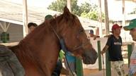Animais carroceiros recebem vacinação gratuita contra febre aftosa em Santarém