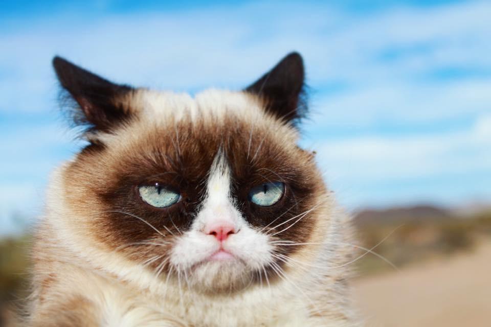 Grumpy Cat  (Foto: Reprodução/Facebook)