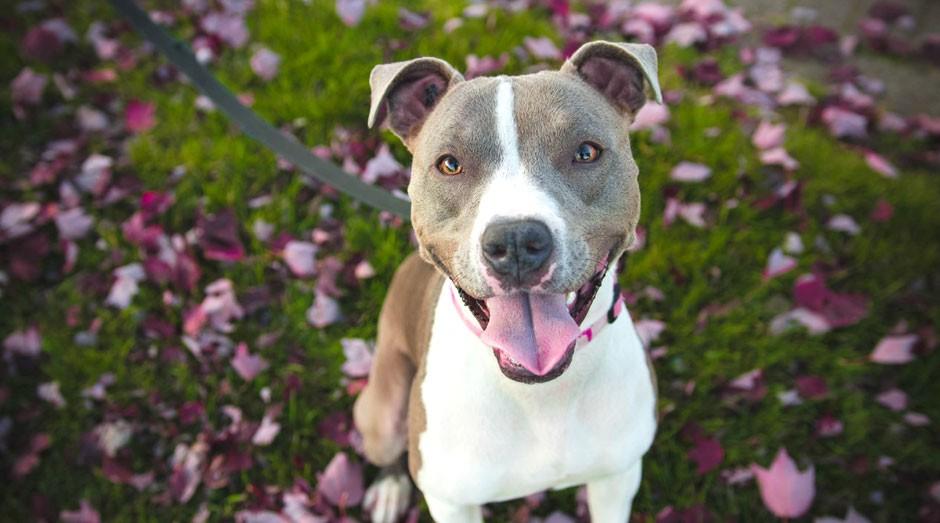 Cachorro: passear com cães é novo foco do mercado pet (Foto: pexels)