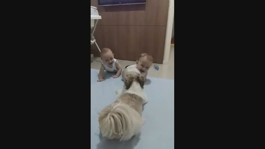 Em vídeo, cão dá 'sustos' e leva bebês gêmeos às gargalhadas em SC