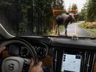 Volvo S90 terá tecnologia autônoma e detecção de animais grandes