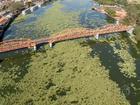 Poluição faz aumentar quantidade de aguapés no Rio Tietê (SP)