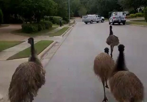 Caso ocorreu em Round Rock, no estado do Texas (Foto: Round Rock Police)